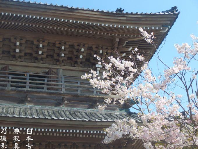 光明寺 山門 桜