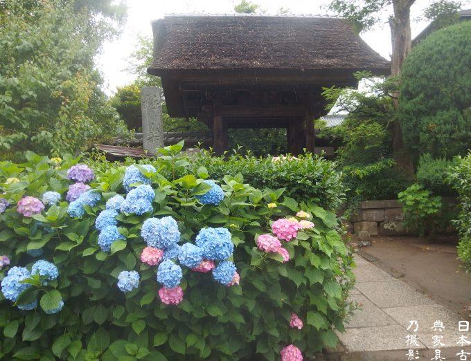 極楽寺 山門と紫陽花